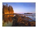Tide Pools  Botanical Beach  Juan de Fuca Provincial Park  Vancouver Island  BC  Canada