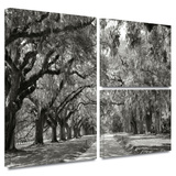 Live Oak Avenue Gallery-Wrapped Canvas