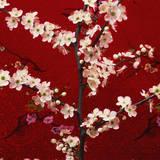 Prunus  Cherry Tree