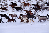 Horses Running through Snow