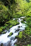 Wahkeena Creek in Columbia River Gorge