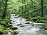 Forest Creek with Deciduous Forest in the Black Forest  Germany