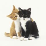 Black and Ginger Kittens Hugging