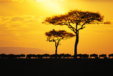 Silhouette of Wildebeest Herd