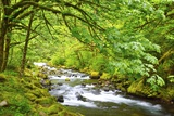 Tanner Creek  Columbia River Gorge National Scenic Area  Oregon  Pacific Northwest