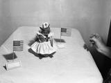 Little Squirrel Dressed-Up as Nurse with American Flags