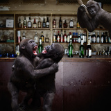 Monkey Bar (Drunk Monkeys) Art Poster Print