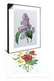 Botanical Study of Hellebore & Lilacs Set