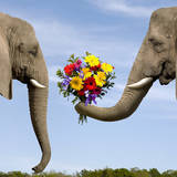 Elephant Giving Bouquet