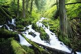 Wahkeena Creek and Surrounding Trees