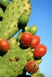 Cactus  San Miguel De Allende  Guanajuato  Mexico