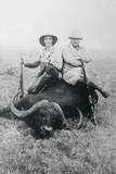 Teddy Roosevelt Sitting on Dead Water Buffalo with Rifle