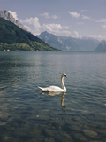 View of Swan on Lake Geneva