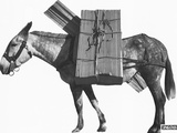 Profile of a Pack Mule