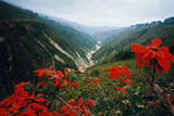 View of Flowers and Valley