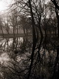 Water Reflecting the Trees of Victoria Park