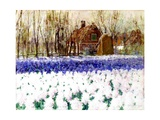 A Cottage and a Field of Hyacinths