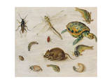 A Study of Insects  Sea Creatures and a Mouse
