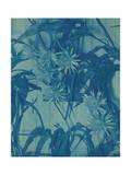 Floral Study C1900