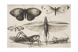 "Six Insects  Plate 2 from the Series ""Muscarum  Scarabeorum Vermiumque Varie Figure and Formae"""