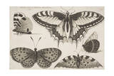 Five Butterflies
