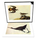 Killdeer & Limpkin Set