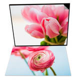 Pink tulips & Pink ranunculus Set