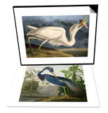 "Great White Heron from ""Birds of America"" & Louisiana Heron from ""Birds of America"" Set"