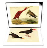 Scarlet Ibis & Black Oystercatcher Set