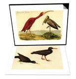 Scarlet Ibis & Black Oystercatcher Set