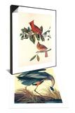 Cardinal Grosbeak & Great Blue Heron Set