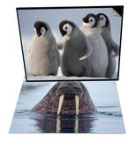 Emperor Penguins in Antarctica & Walrus swimming Set