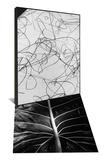 Reeds in Sand & Leaf by Brett Weston Set