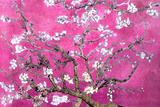 Almond Branches Pink