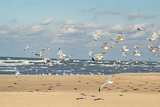 Flock of seaguls on the beaches of Lake Michigan  Indiana Dunes  Indiana  USA