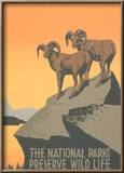 Big Horn Sheep  Travel Poster