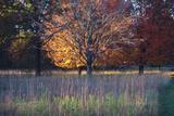 Fall colors of Eagle Creek Park  Indianapolis  Indiana  USA
