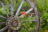 Wagon Wheel in Old Gold Town Barkersville  British Columbia  Canada