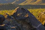 Petroglyphs  Signal Hill  Saguaro National Park  Arizona  Usa