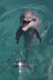 Baby Atlantic Bottlenose Dolphin Curacao  Netherlands Antilles