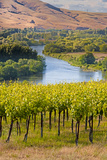USA  Washington  Red Mountain Vineyard on with the Yakima River