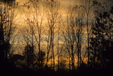 Colorful sunset sky thru bare branches of Eagle Creek Park  Indianapolis  Indiana  USA