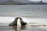 Ecuador  Galapagos Islands  Santiago Island Galapagos Sea Lion