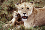 Kenya  Mother Lion Sitting with Her Cub