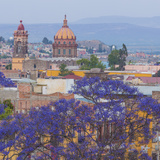 Mexico  San Miguel De Allende Jacaranda Tree and City Overview