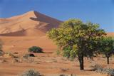 Namibia  Sesriem and Sossusvlei  Sand Dunes Desert at Namib NP