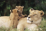 Kenya  Mother Lion with Cubs