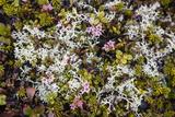 Russia  Kamchatka  Karaginsky Island  Tundra Vegetation Wildflowers