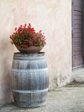 Europe  Italy  Tuscany Flower Pot on Old Wine Barrel at Winery