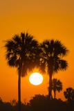 Cabbage Palms at Sunrise  Florida Bay  Everglades NP  Florida  Usa